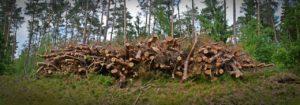 Brennholz Lagerung draussen