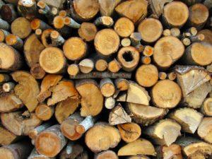 Brennholzsägen